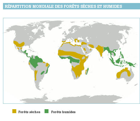Map of the humid and dry forest in the world